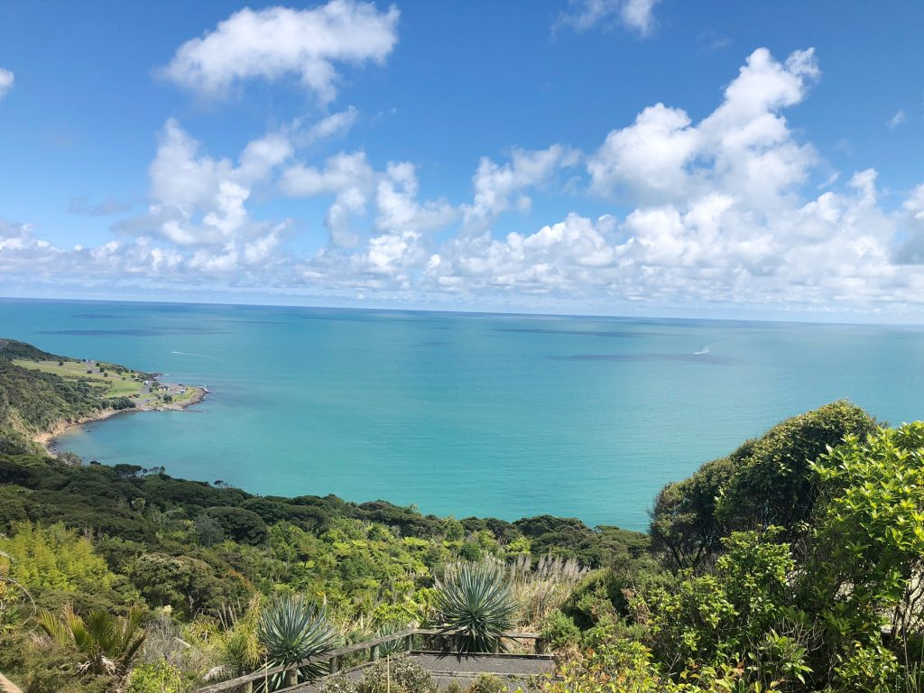 View in Raglan over forest and tasman sea
