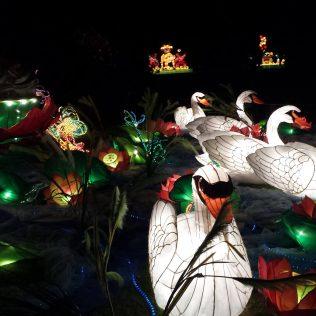 Auckland lantern festival, photo credit: mark carryer