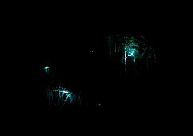 Glowworms at the Waitomo Caves