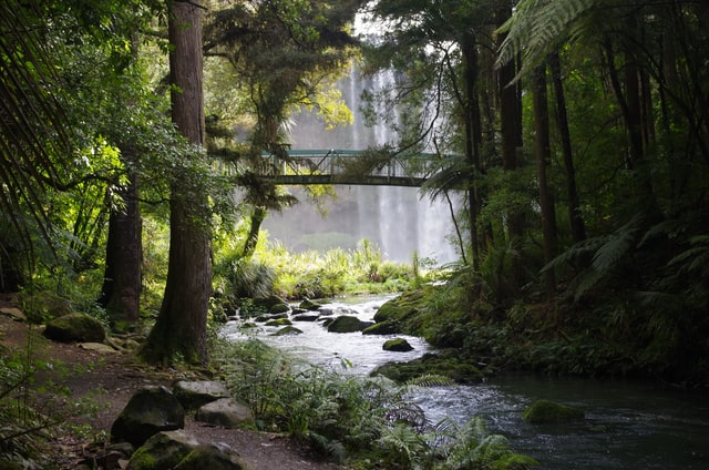 Whangarei Falls.